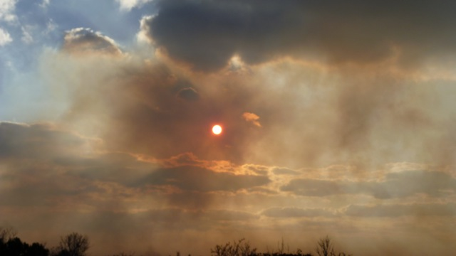 Abaco Forest Fire 13