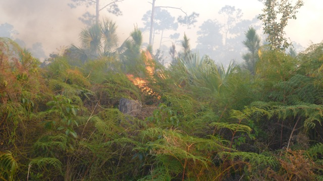 Abaco Forest Fire 4
