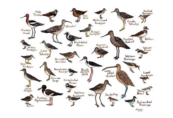 Shore Birds Kate Dolamore Etsy