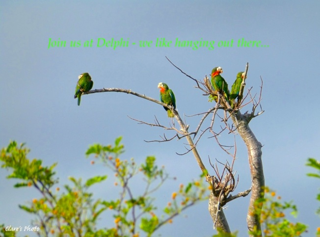 Clare - Parrots for DCB