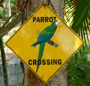parrot crossing