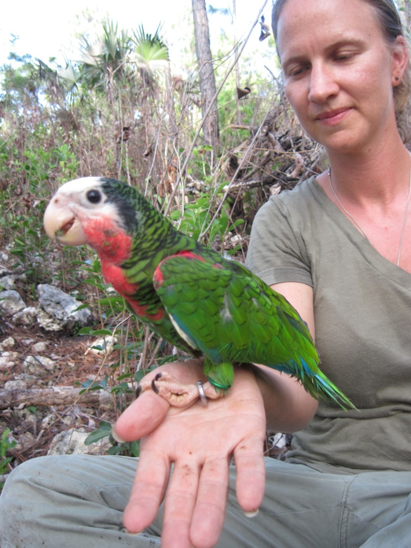 CS with Abaco parrot chick