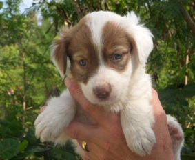 Harvey the Potcake Puppy Dog, Abaco