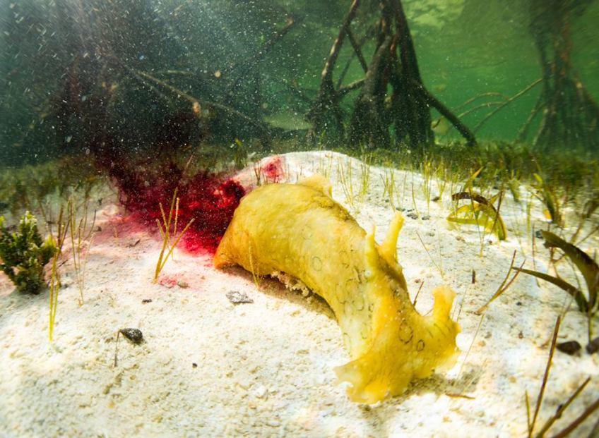 SEA HARE Bimini Marine Protected Area Campaign via Click 242 Nature