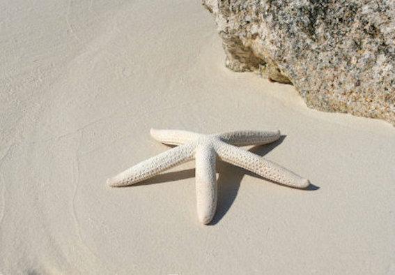 white-finger-starfish-2-rhonda-pearce