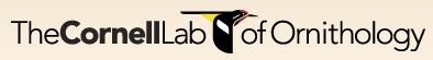 Cornell Lab Logo
