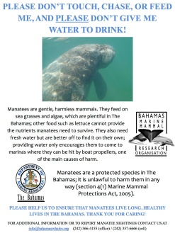 Manatee Awareness Poster jpg copy