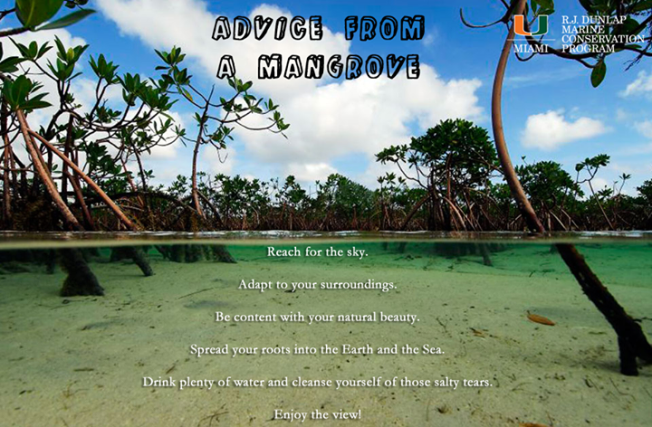 Advice from a Mangrove