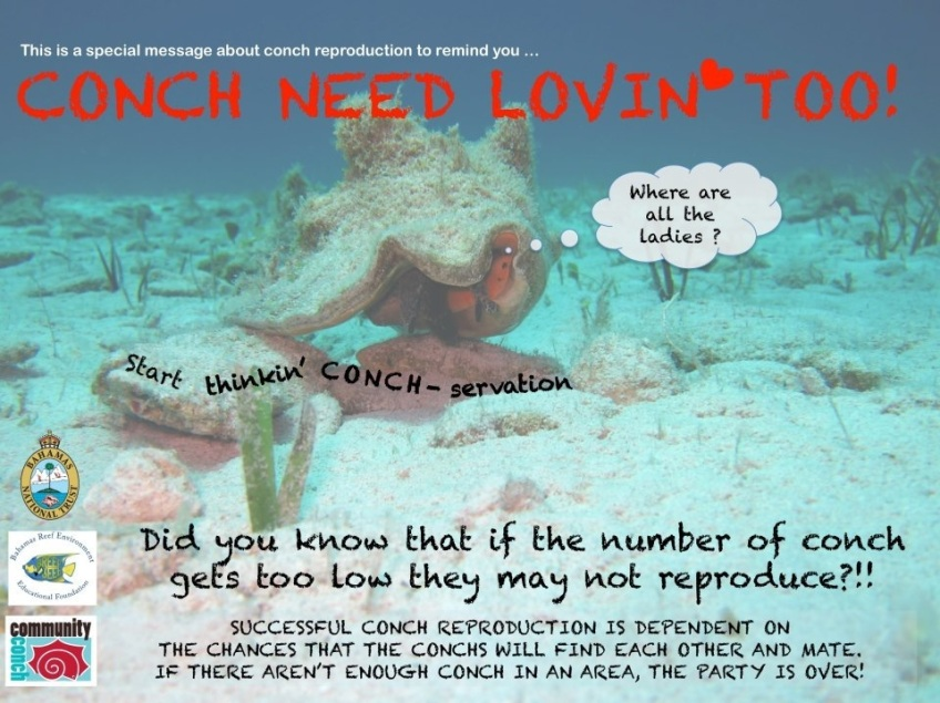 Conch Conservation Notice
