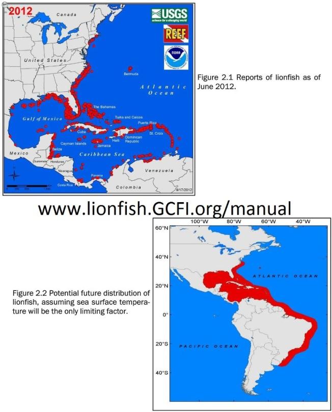 REEF lionfish progam graphics