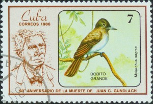 Cuba Stamp La Sagra's Flycatcher