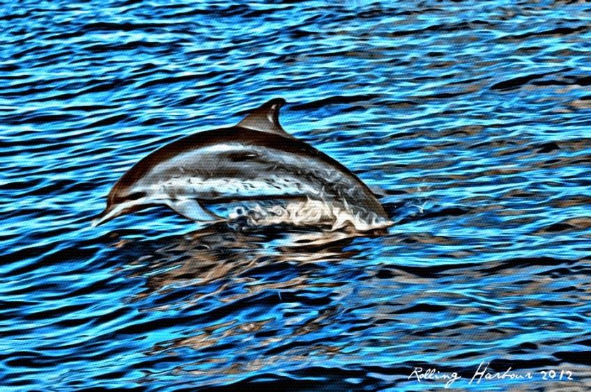 BMMRO Dolphin Image FV