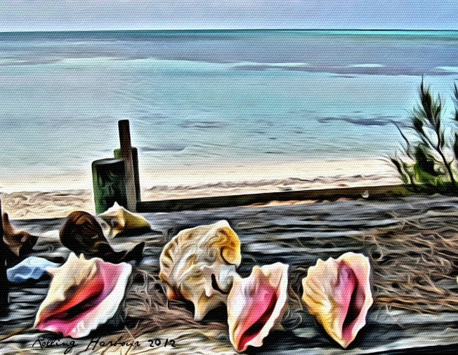 conchs-at-sandy-point-1