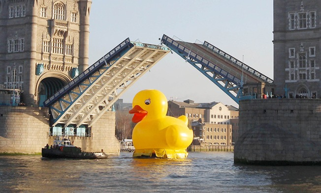 A giant 50 foot rubber duck floats down the Thames under Tower Bridge
