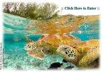 BSTCG logo green sea turtles