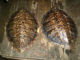 IUCN: illegal turtle shells