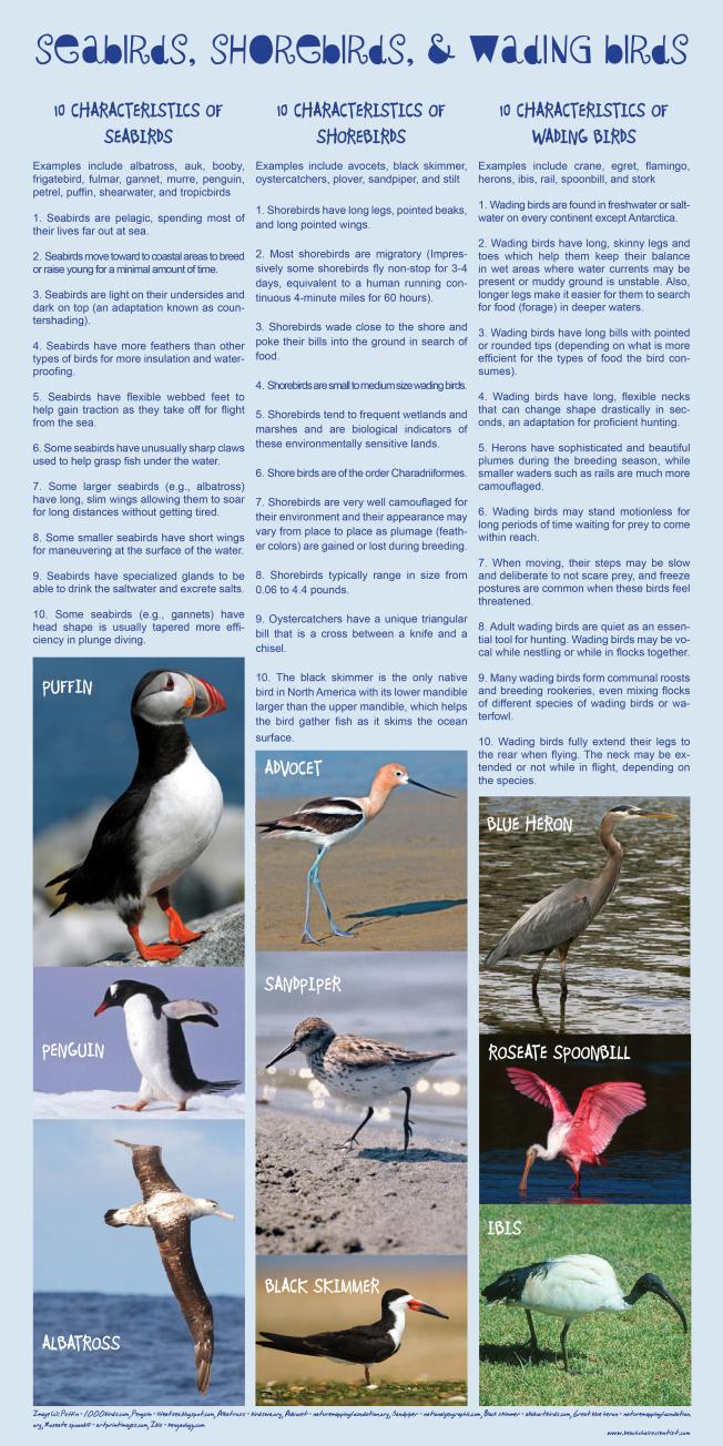 seabird shorebird wading bird chart ©beachchairscientist