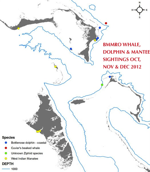 BMMRO CETACEAN SIGHTINGS OCT:DEC 12