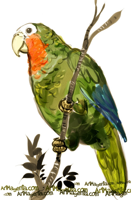 Abaco-Parrot