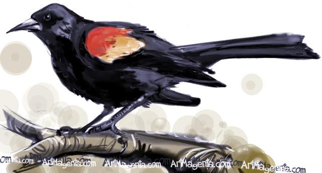 red-winged-blackbird