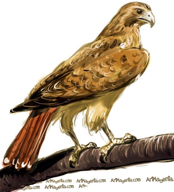 Redtailed-HawkJPG