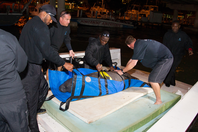 W-Atlantis-Animal-Rescue-team-members-arrive-from-Abaco-with-Georgie