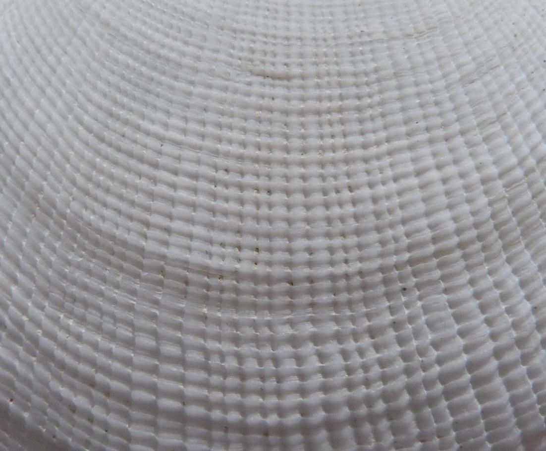 Abaco seashell 7b