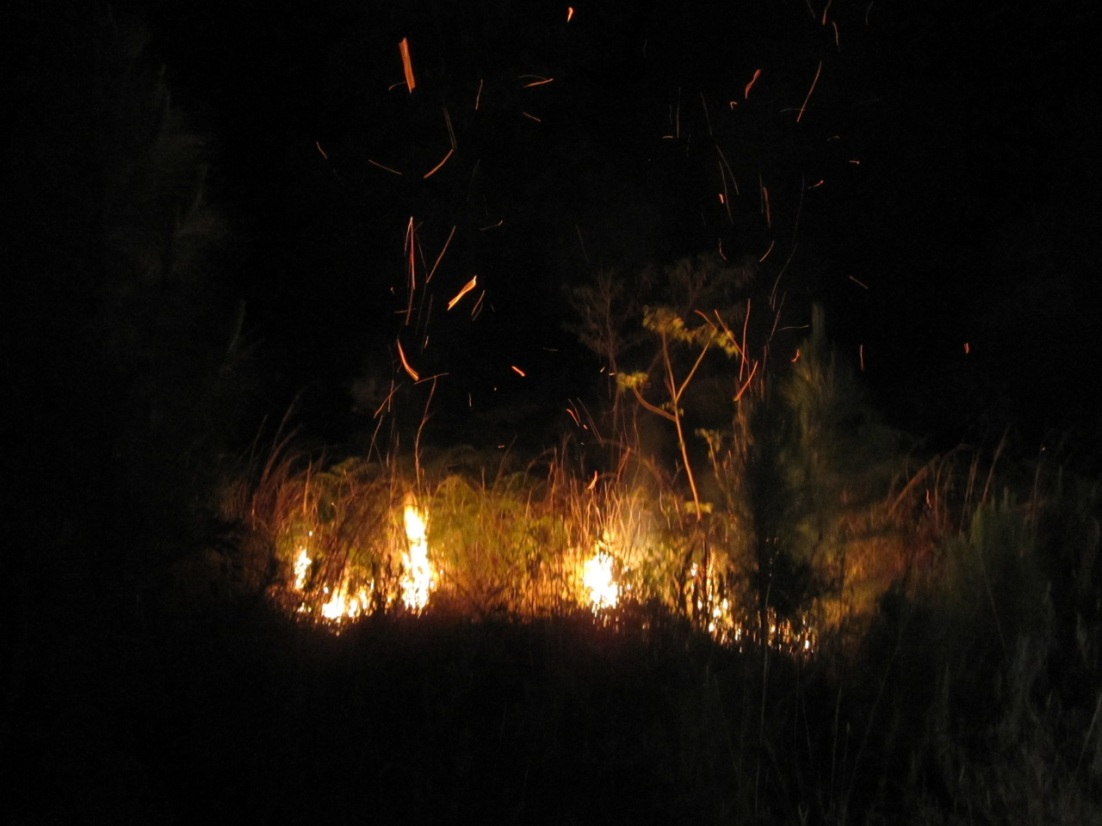 Forest Fires, Abaco 1