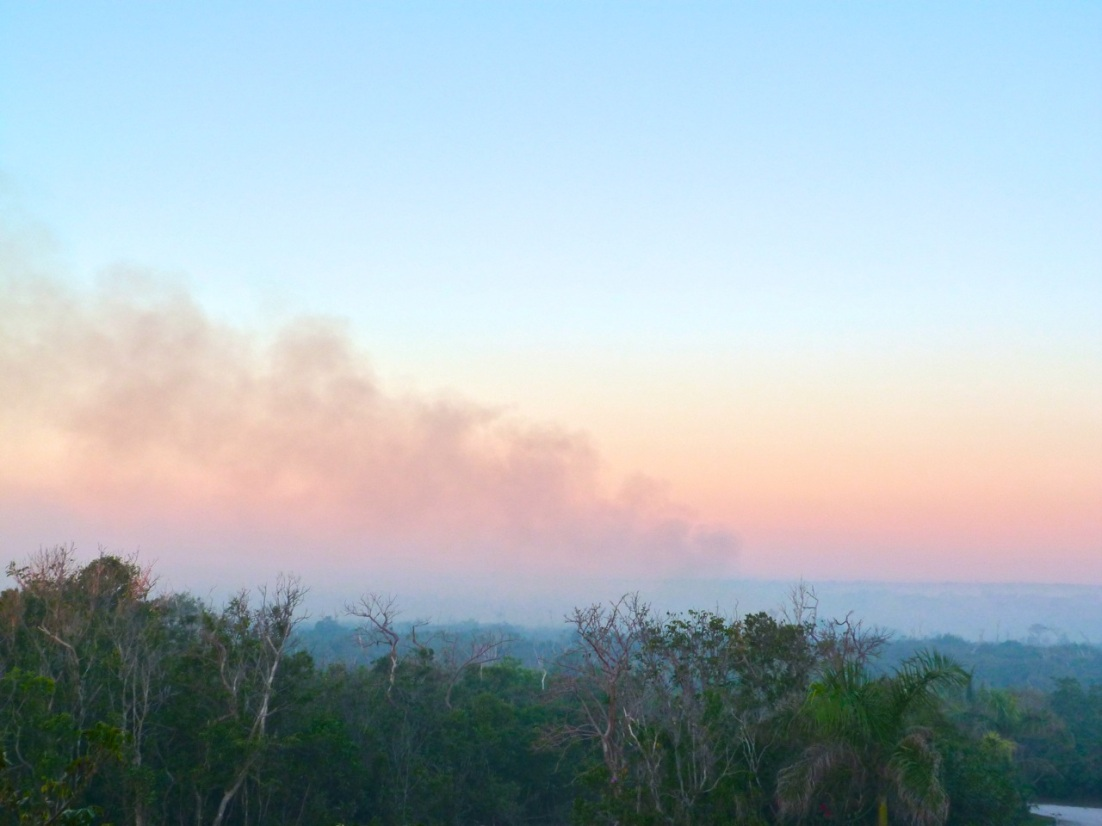 Forest Fires, Abaco 12