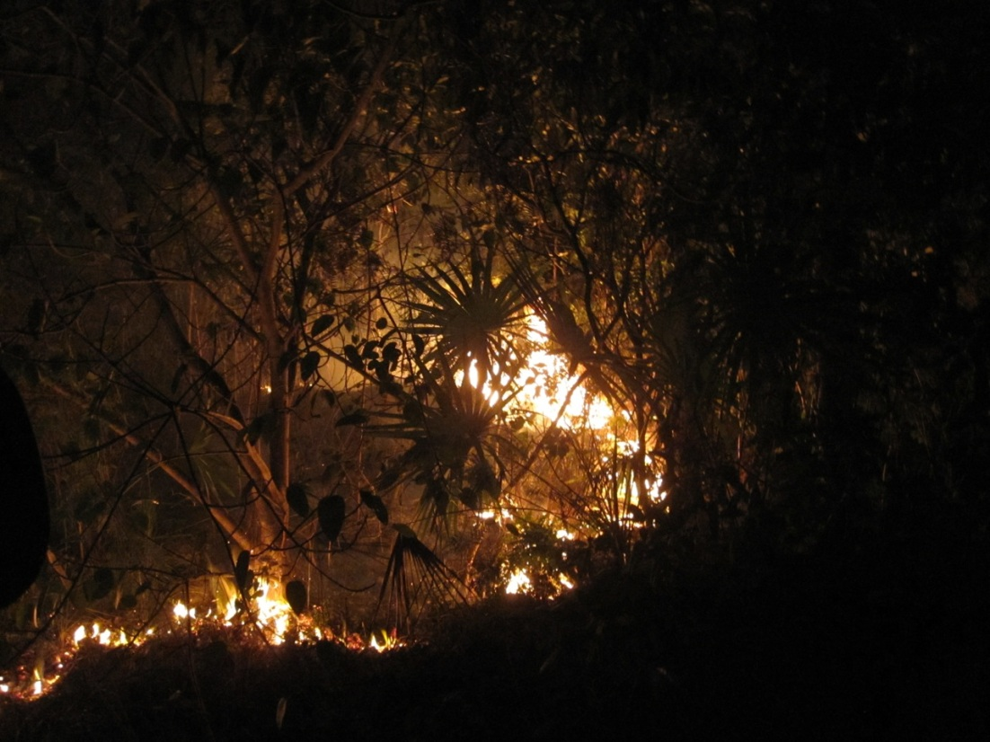 Forest Fires, Abaco 2
