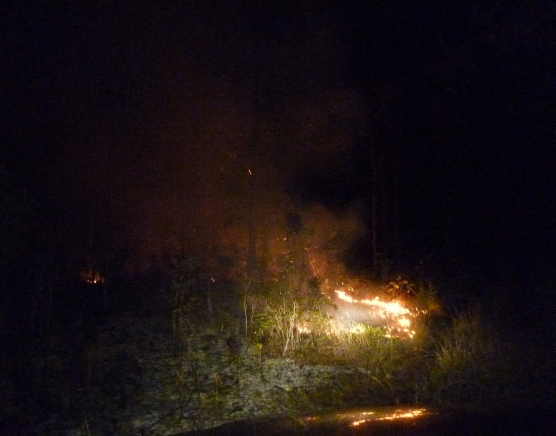 Forest Fires, Abaco 5