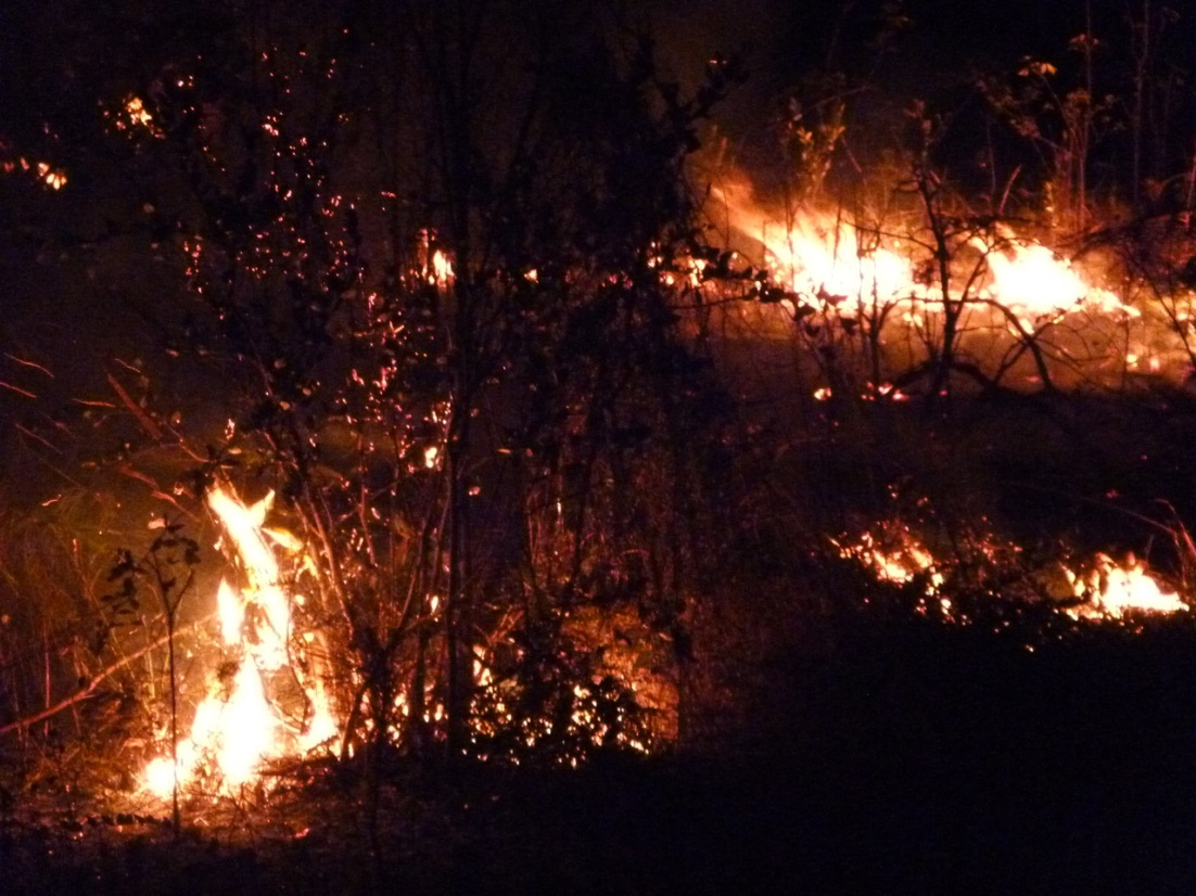 Forest Fires, Abaco 7