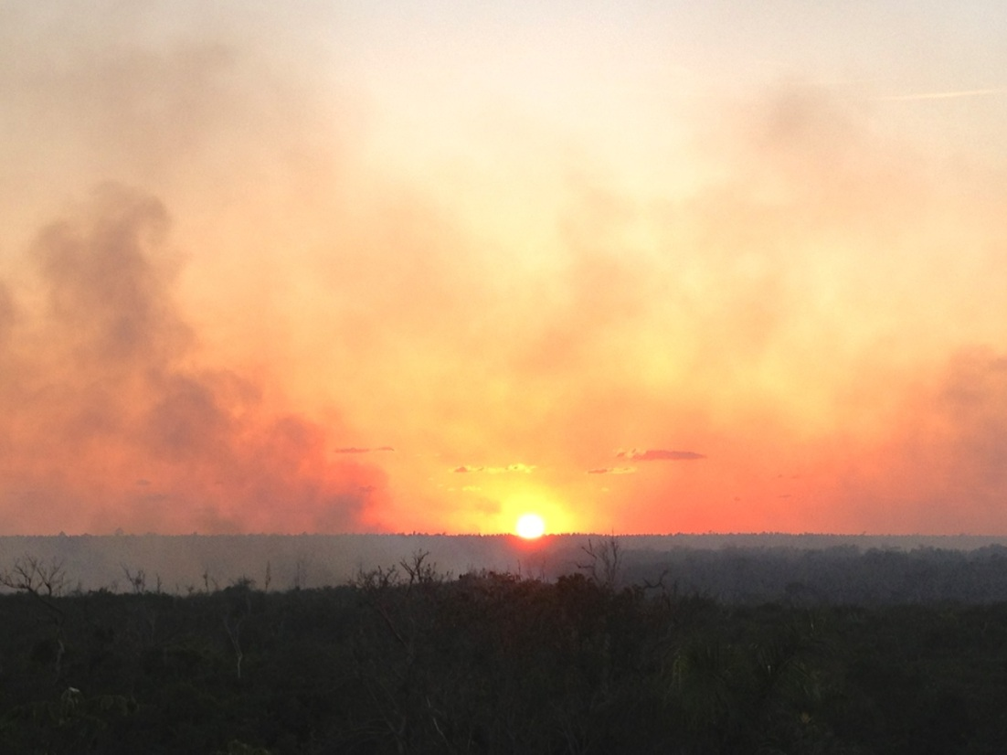 Forest Fires, Abaco 9