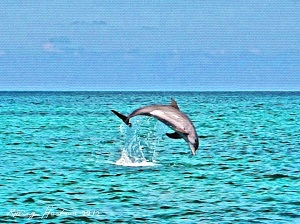 Dolphin Leap copy