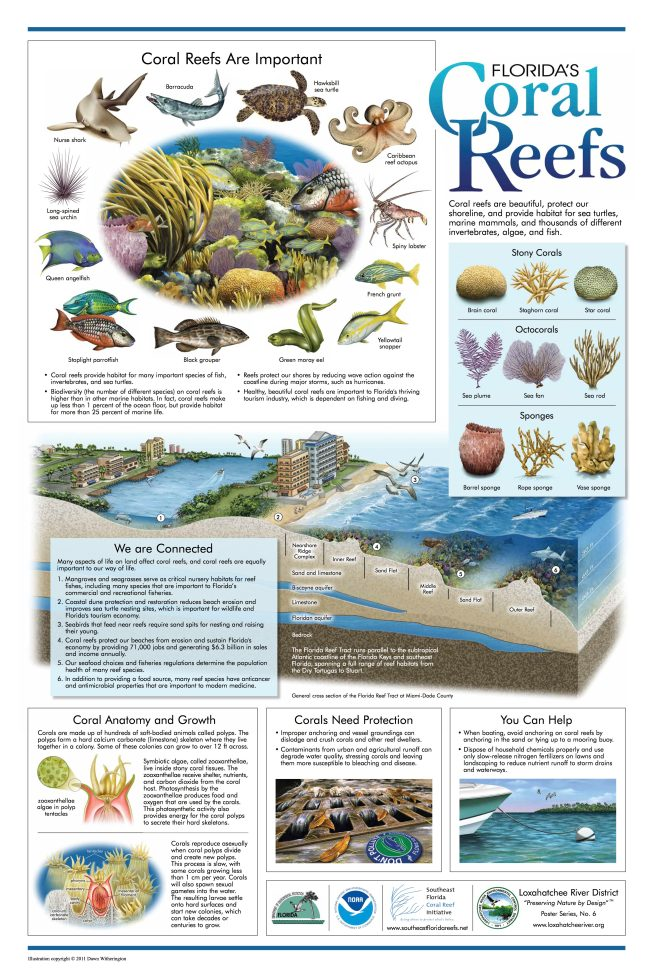 Loxahatchee River District Coral Reef Poster