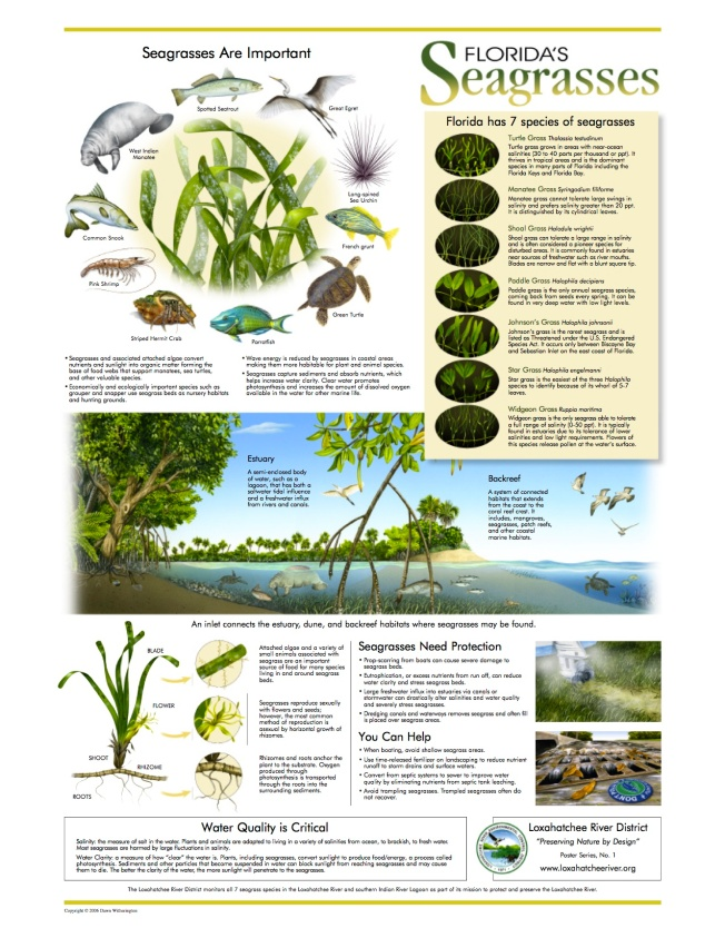 seagrasses_poster_8.5x11