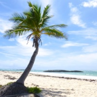SHORE THINGS: BEACHCOMBING ON A PRISTINE ABACO BEACH