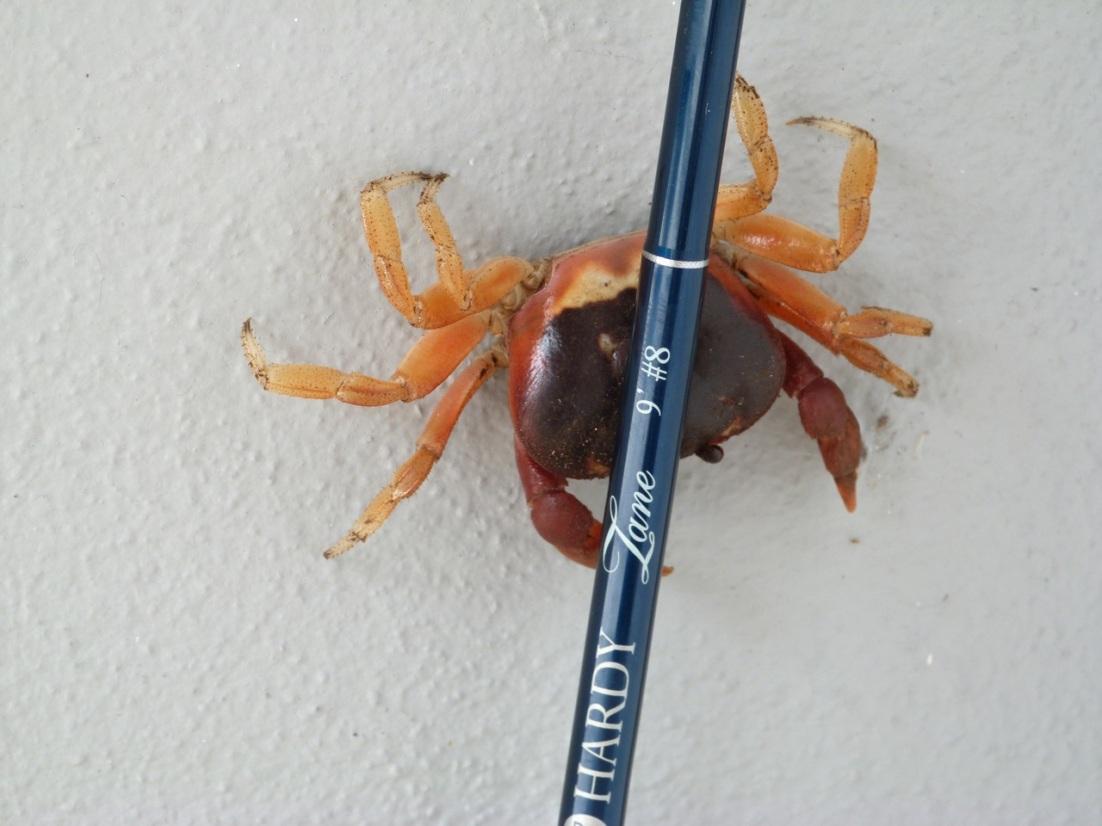 Crab & rod