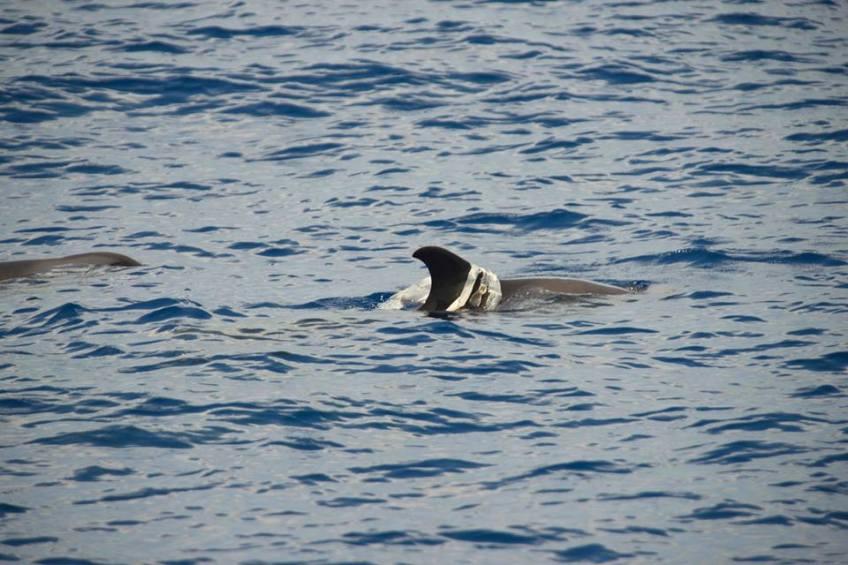 Marine Mammals & plastic