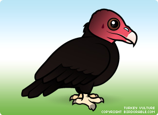 turkey-vulture