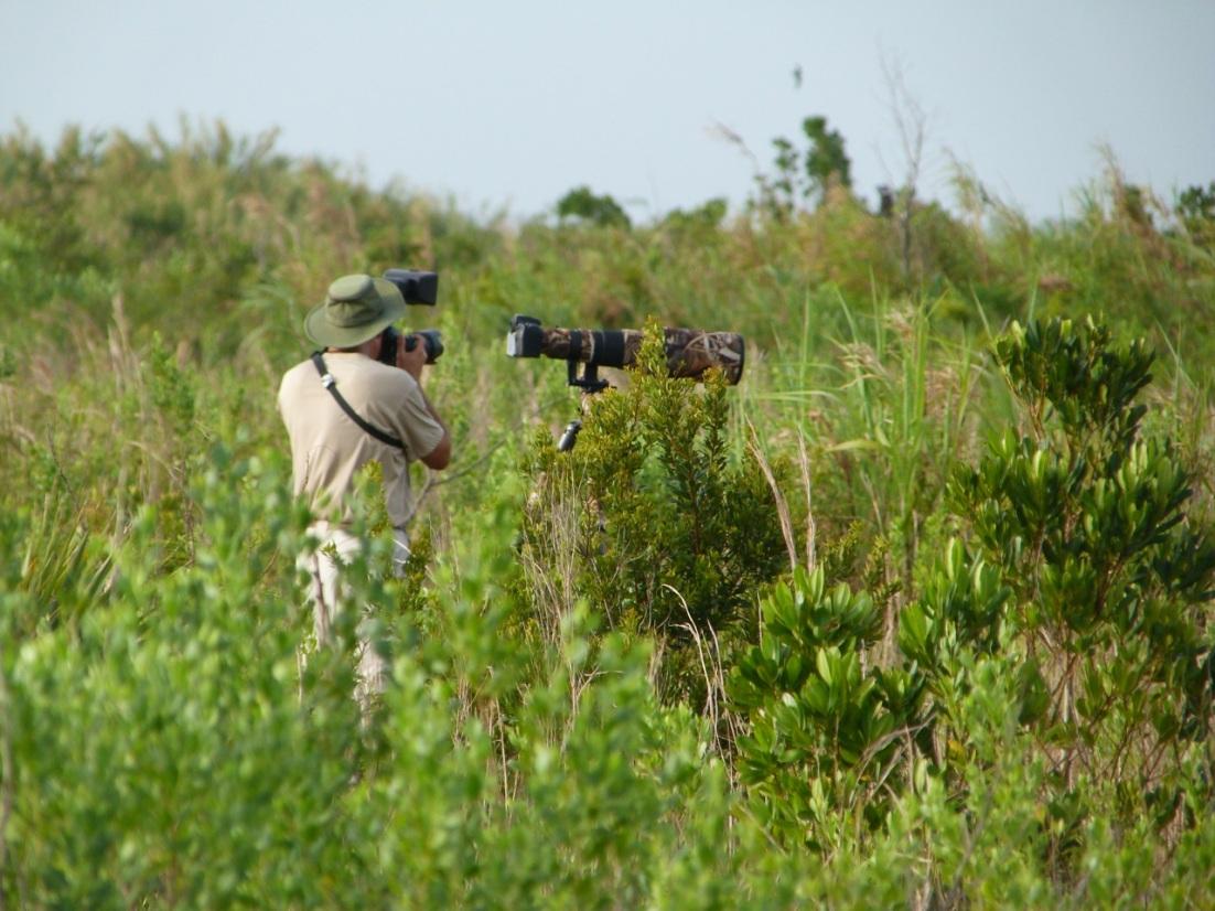 Wildlife Photography on Abaco 21