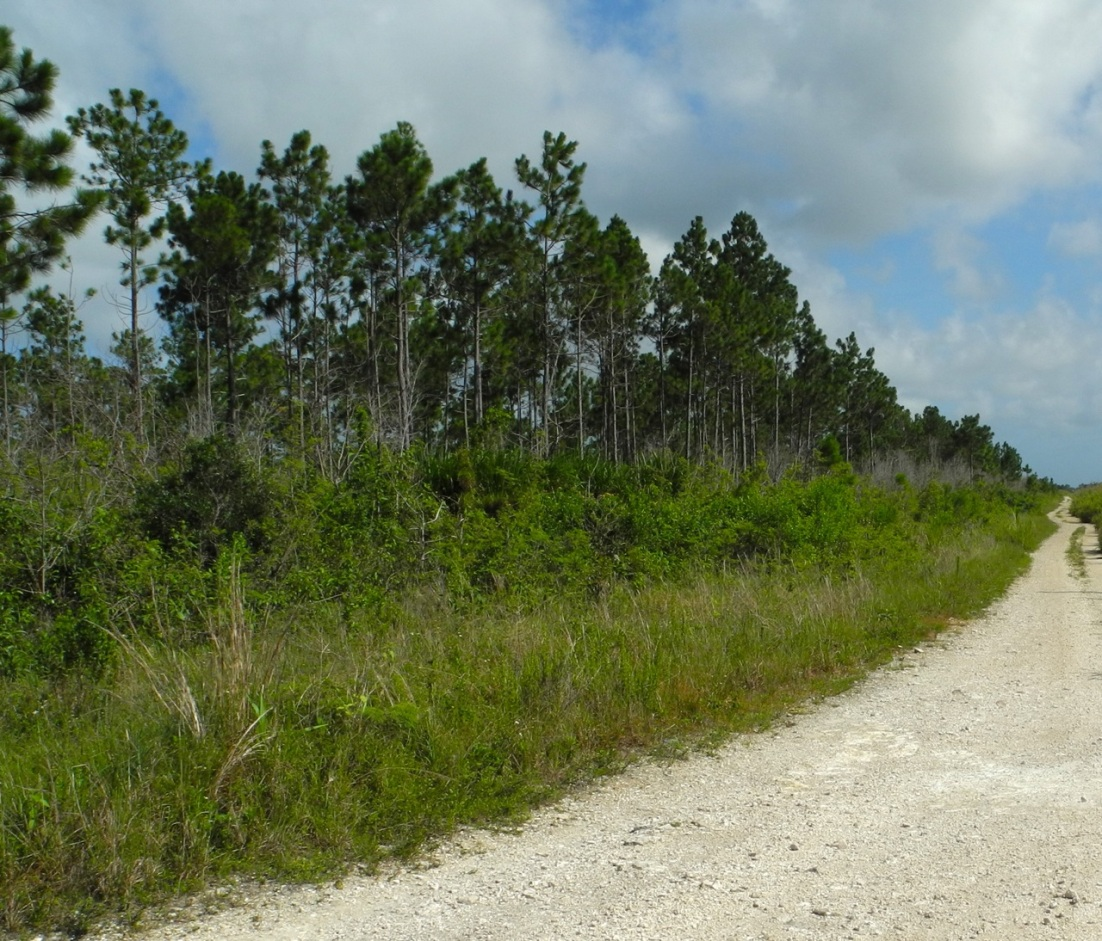 Birdwatching Hotspot, Abaco Backcountry ©Tom Sheley