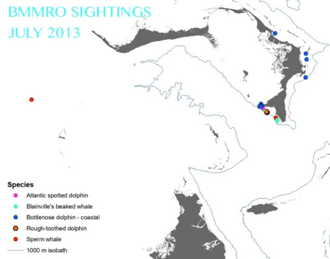 BMMRO SIGHTINGS JULY 2013