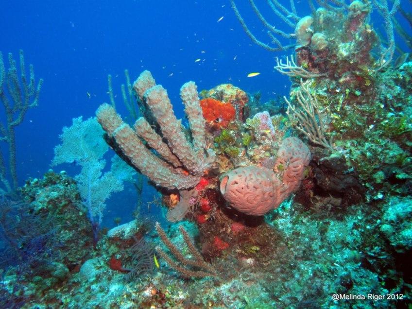 Corals ©Melinda Riger @ G B Scuba