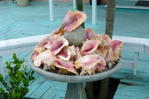 Conchs Marsh Harbour Abaco