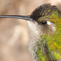 PRECIOUS EMERALDS ON ABACO: GREEN HUMMINGBIRD JEWELS