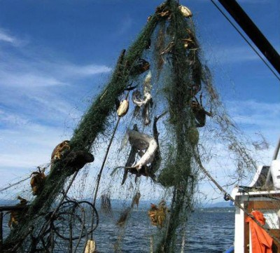 Ghostfishing-NOAA Marine Debris