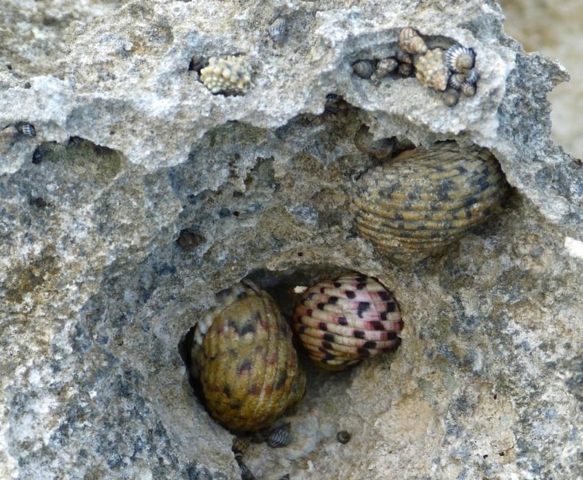 Rock Pool, Abaco 12