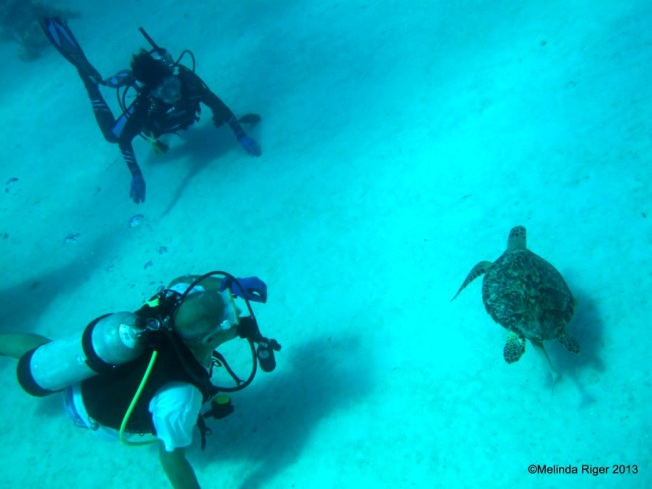 Hawksbill Turtle, Bahamas © Melinda Riger @ G B Scuba