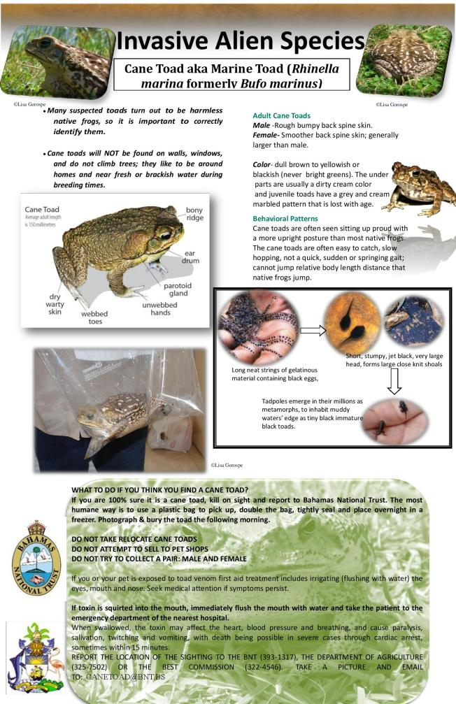 Cane-Toad-sheet.pdf-page-001